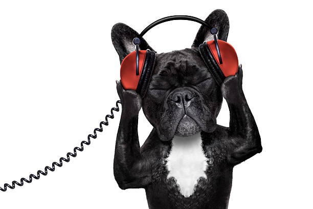 dog listening music - dance music stock pictures, royalty-free photos & images