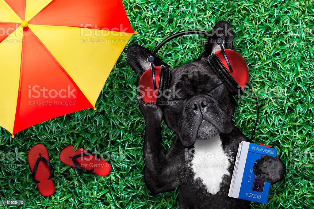 dog listening music stock photo