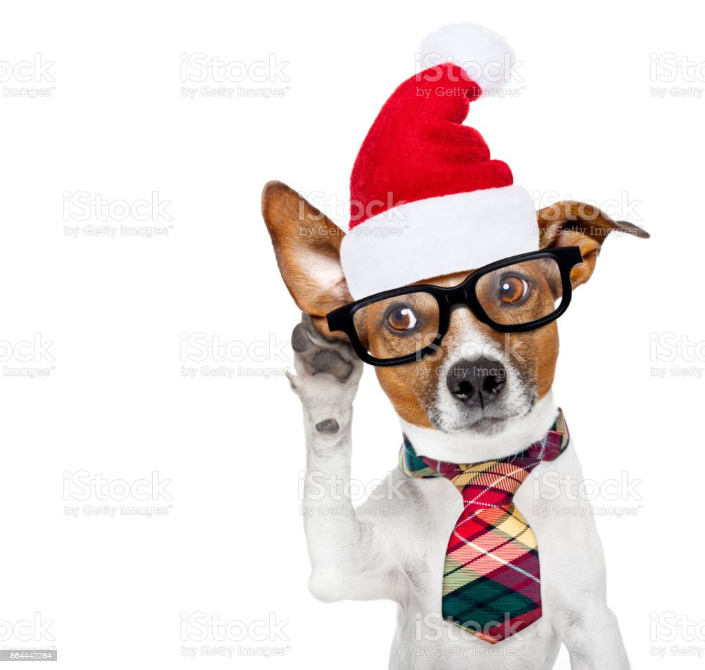 dog listening on  christmas stock photo