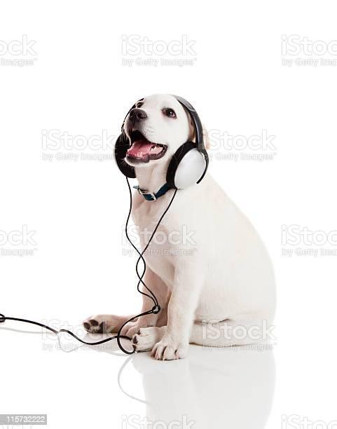Dog listening to music picture id115732222?b=1&k=6&m=115732222&s=612x612&h=ox9jtbbsuawj0ntsn3alwurmpkn hv9gccc37glx5cm=