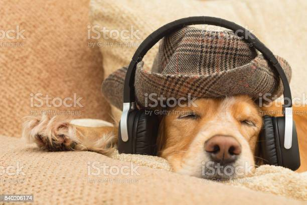 Dog listens to music in headphones picture id840206174?b=1&k=6&m=840206174&s=612x612&h=mhmp5vqcerw0kdiyl90ojtmw3 1jqtjbn 8lrpwzj8o=