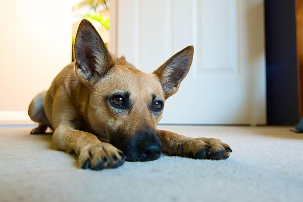 Hund lokking für Spielkamerad sein – Foto