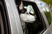 istock Dog look out the car window 1204265721