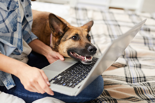 Köpek Laptop Ekran Bakıyor Stok Fotoğraflar & Alışveriş'nin Daha Fazla Resimleri