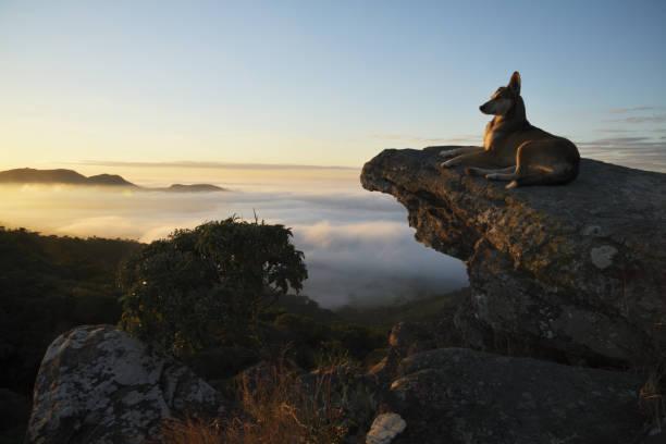 Cão que olha a névoa nas montanhas em Brasil - foto de acervo