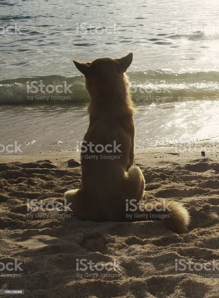 Dog looking at the sea. royalty-free stock photo