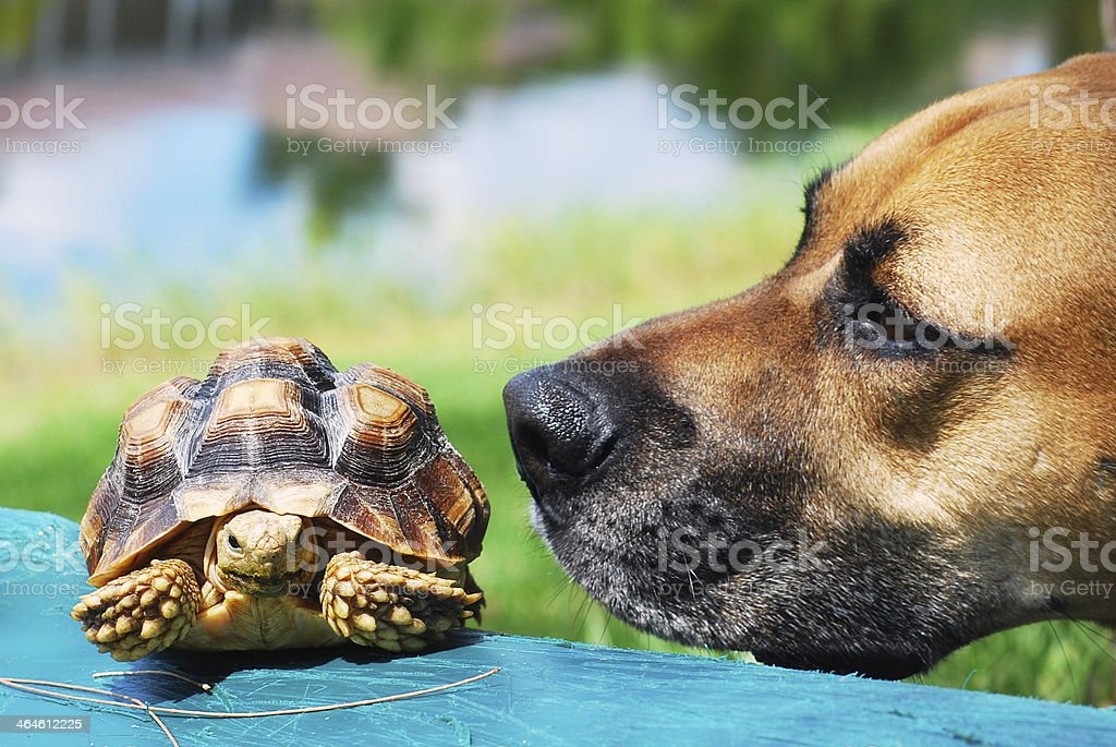 Dog Looking at the Turtle stock photo