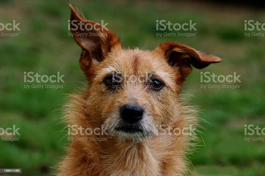 Dog, looking at you. royalty-free stock photo