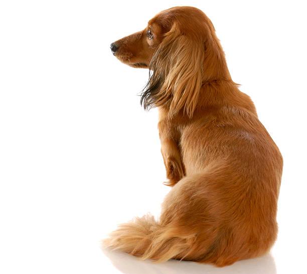 Dog looking away from viewer picture id97866152?b=1&k=6&m=97866152&s=612x612&w=0&h=mt94uvgprkewy5minqlsjmdyj4ounzki8bo7jsmhays=