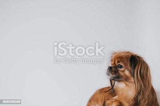 istock Dog looking away 898998588