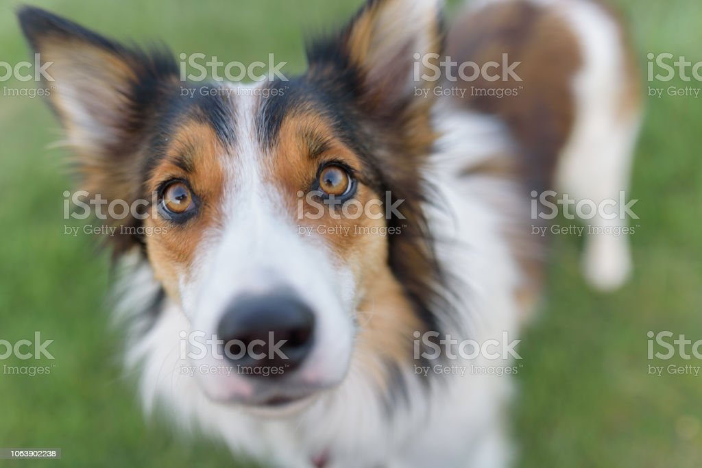 Dog looking earnestly at camera stock photo
