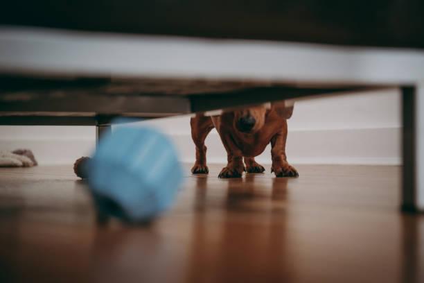 dog looking for the toy. - poniżej zdjęcia i obrazy z banku zdjęć
