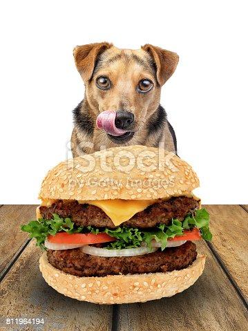 dog looking delicious hamburger licking chops isolated