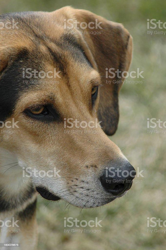 Dog Looking stock photo