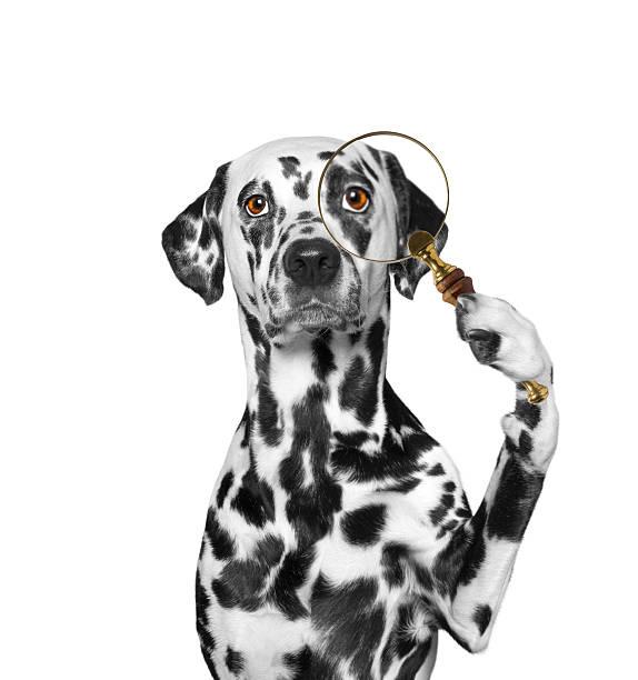 Dog looking through a magnifying glass loup picture id513989286?b=1&k=6&m=513989286&s=612x612&w=0&h=jfbr4jeapmsnnubpmjn7h3lu1ao 23ol3n2lzjjt5gs=