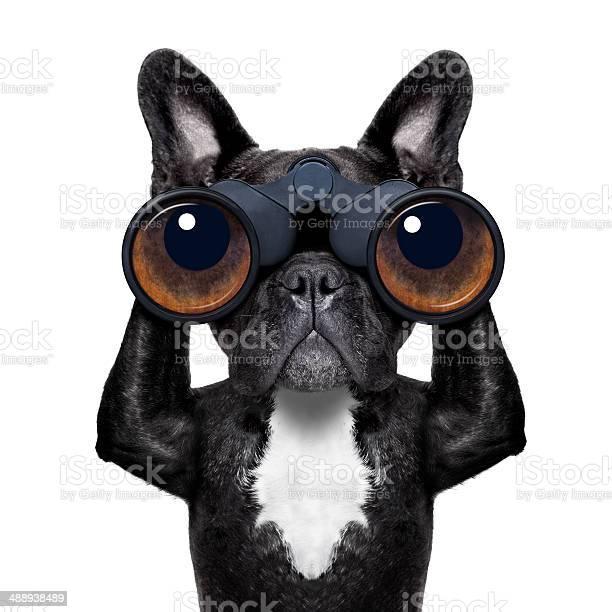 Dog looking through binoculars picture id488938489?b=1&k=6&m=488938489&s=612x612&h=2miofl9pdcgb9js9c2xt10qicnlqxokgcj1yyhgfcf8=