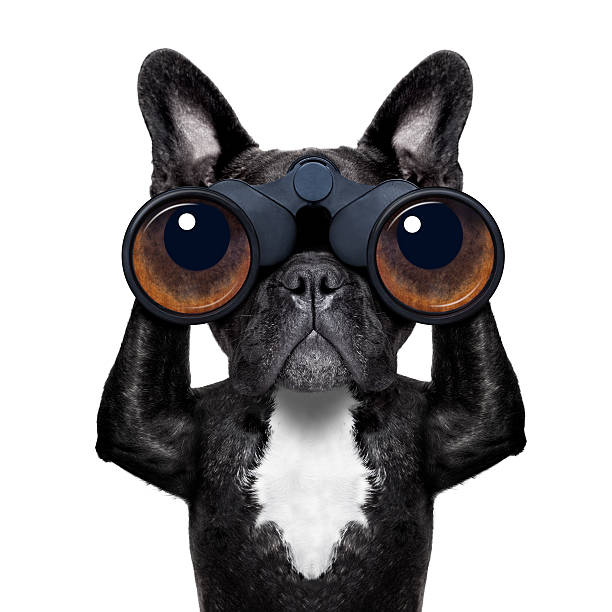 hund blick durchs fernglas - hundeaugen stock-fotos und bilder
