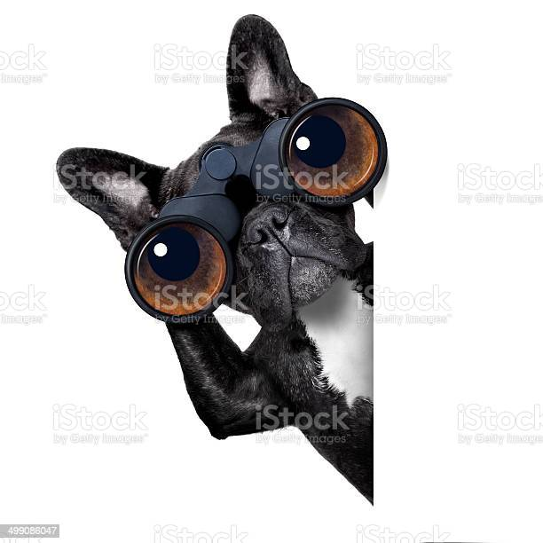 Dog looking through binoculars picture id499086047?b=1&k=6&m=499086047&s=612x612&h=z2soshplnay vqyeoeamvzeng9oboa4ng4cazzzm3ki=