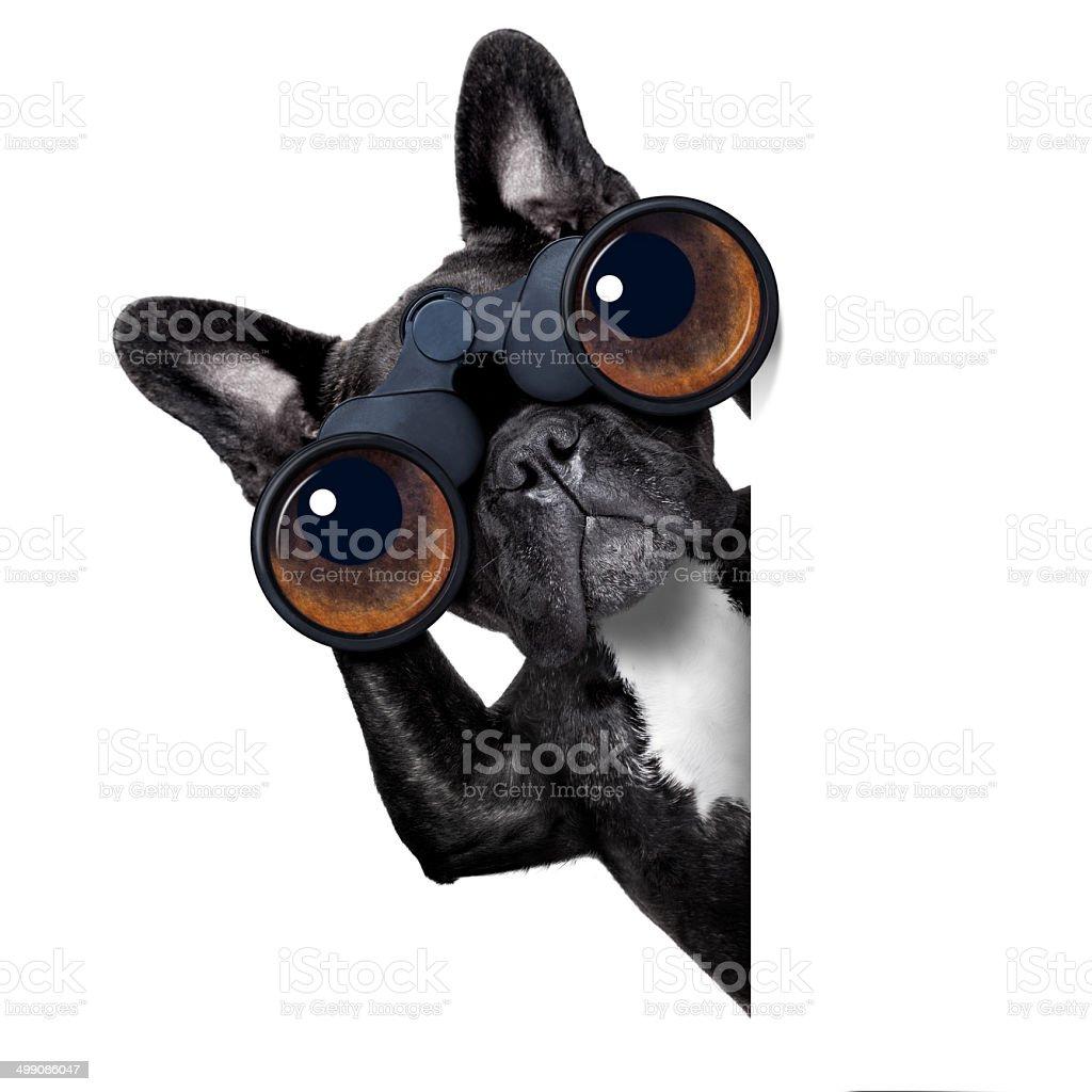 dog looking through binoculars stock photo