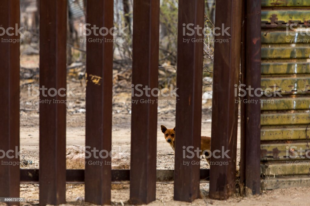 A dog on the Mexican side of the United States border wall looking...