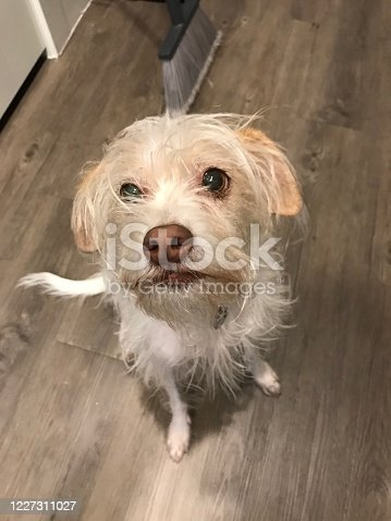 615107296 istock photo Dog looking up 1227311027