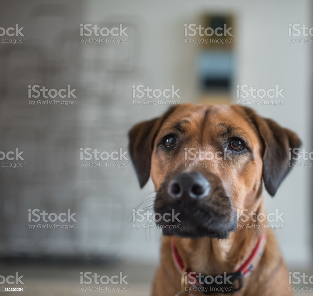 Dog looking up royalty free stockfoto