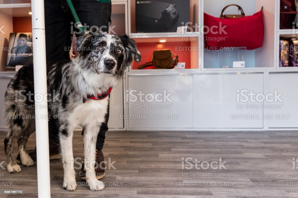 Dog looks out of the eBay Airstream stock photo
