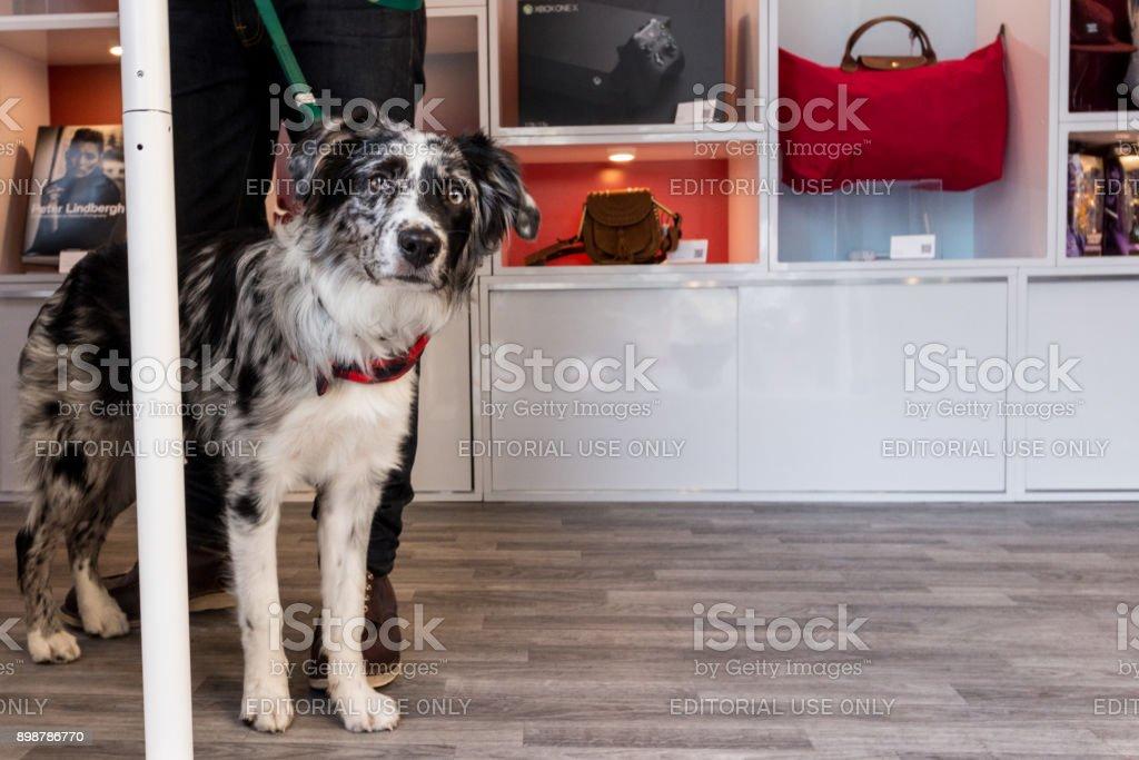 Hund schaut aus der eBay Airstream – Foto