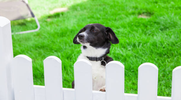 Dog looks over the garden fence