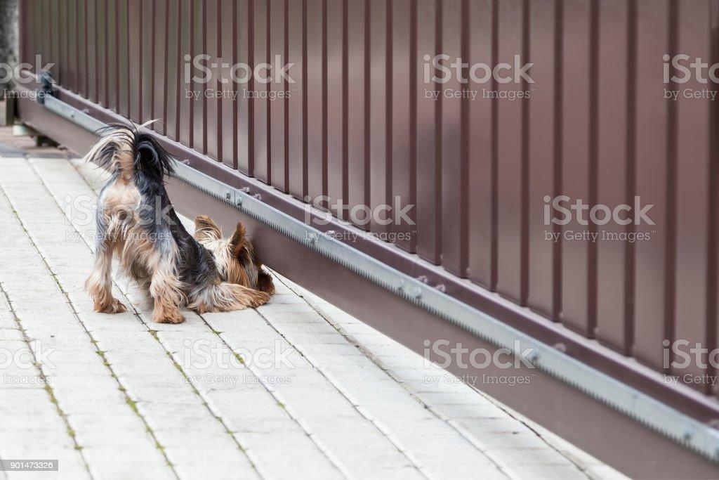 Dog looks under the gate stock photo