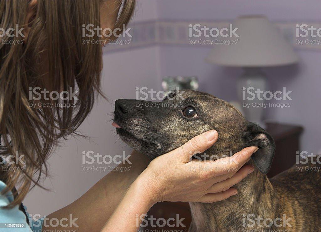 Dog love royalty-free stock photo