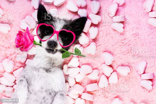 Dog love rose valentines picture id1044361976?b=1&k=6&m=1044361976&s=612x612&h=94myqj4sfe9kz2wynylvayx16knutfphofvszhau19y=