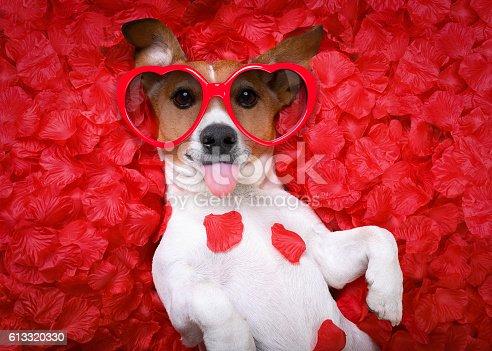638484874 istock photo dog love rose valentines 613320330