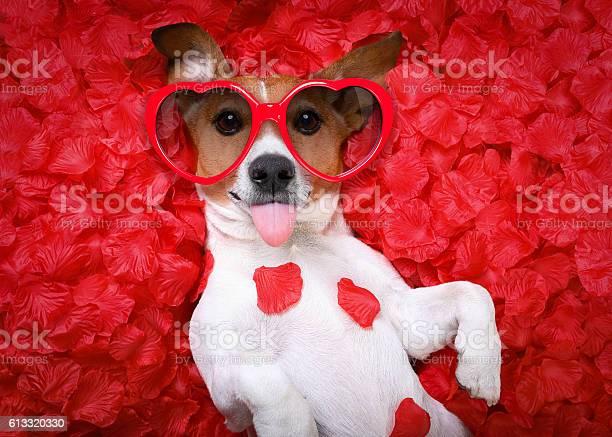 Dog love rose valentines picture id613320330?b=1&k=6&m=613320330&s=612x612&h=hs31qcjoxiu1sct5vh1zqsd xvnfvlodglh2p idmiq=