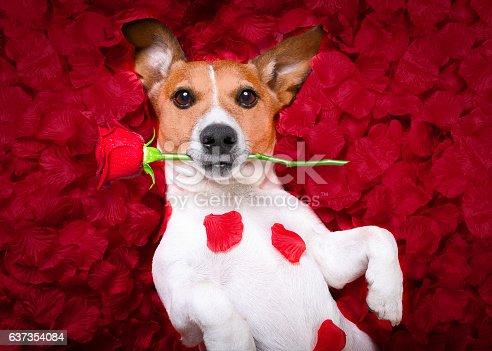 istock dog love rose valentines 637354084