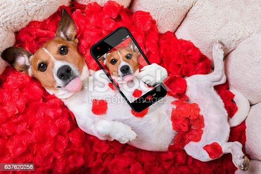 istock dog love rose valentines selfie 637620258