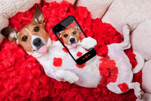 dog love rose valentines selfie