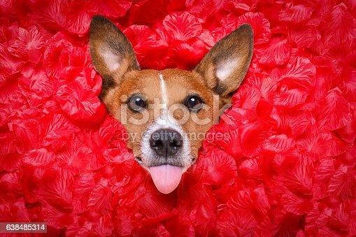 638484874 istock photo dog love rose valentines selfie 638485314