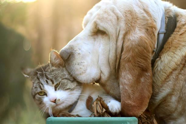 Dog loves cat picture id656558188?b=1&k=6&m=656558188&s=612x612&w=0&h=vn6aqlienumllrv6hvwwkqn0lbcgyeh691xio5fdjpa=