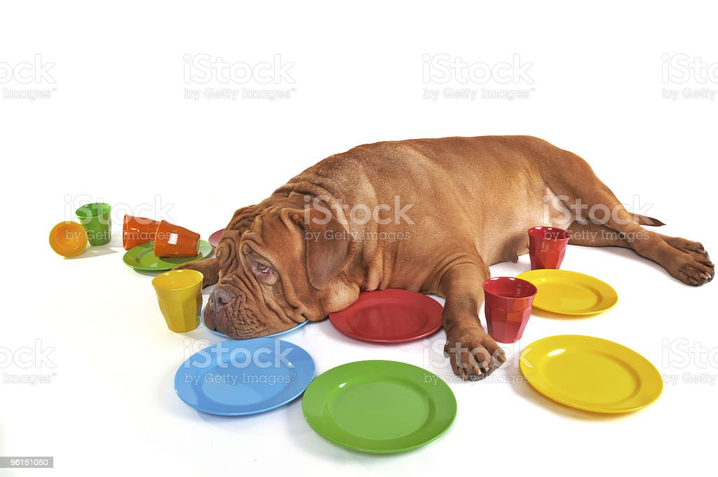 Dog lying among Plates and Cups royalty-free stock photo