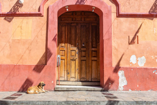 Dog lying at the sun in a lonely street of San Cristóbal de las Casas, Mexico stock photo