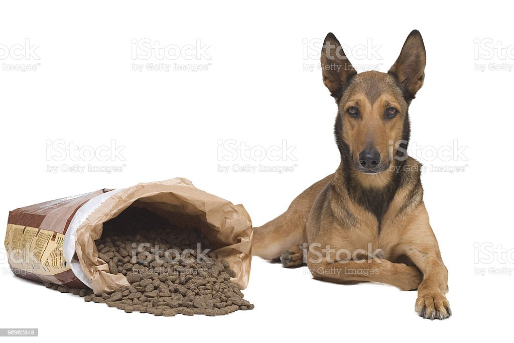 Dog lying down next to his food royalty-free stock photo
