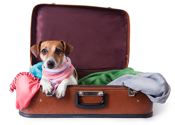 Dog lying in a suitcase for traveling picture id188076597?b=1&k=6&m=188076597&s=612x612&w=0&h=i2qdrprnbxbwszy3mtubmy11pkukbm8aimdaimf9cdk=