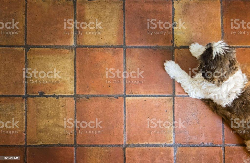 dog lying on red spanish terracotta floor tiles stock photo