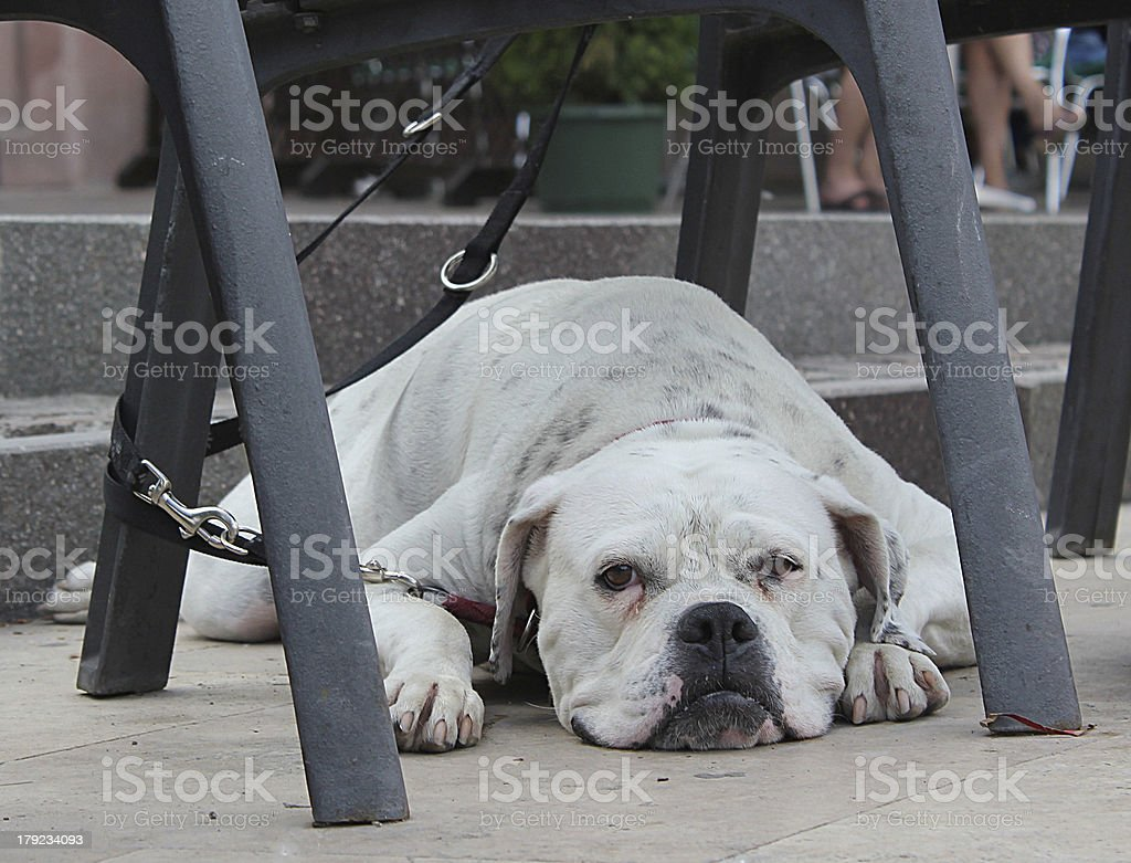Dog lying under a chair on the street royalty-free stock photo