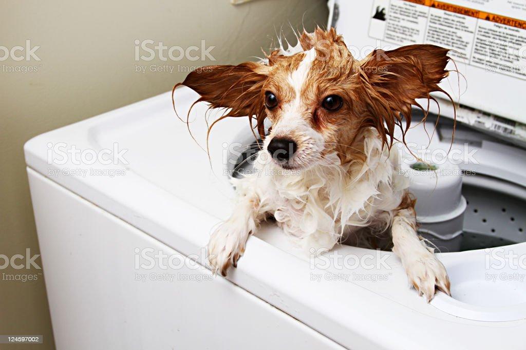 Dog Machine Washed stock photo