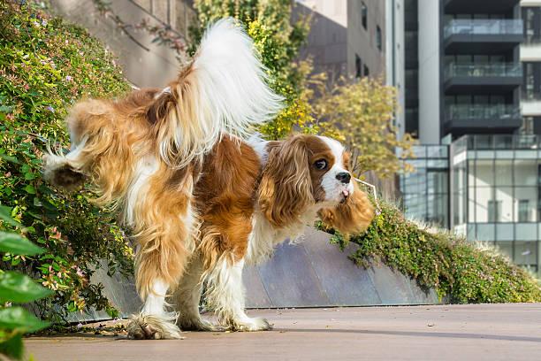 hund kennzeichnung gebiet - revierverhalten stock-fotos und bilder
