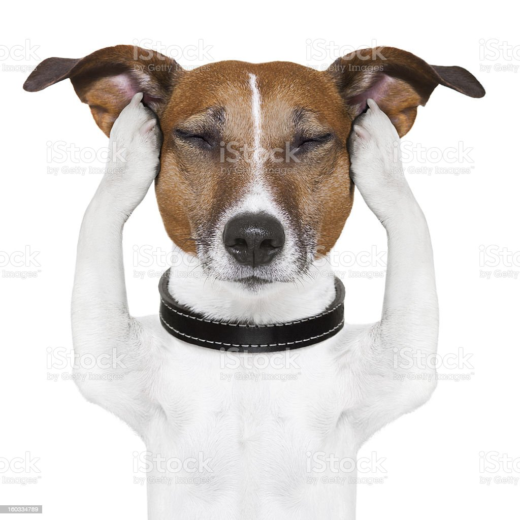 Dog meditating while holding his ears stock photo