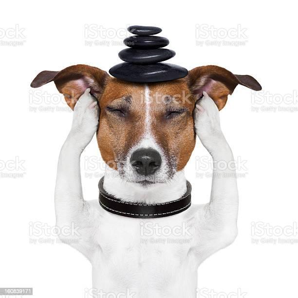 Dog meditation picture id160839171?b=1&k=6&m=160839171&s=612x612&h=fdijgly9wbqnzgx8bovy0atpwogeahgzri38xp1jr54=