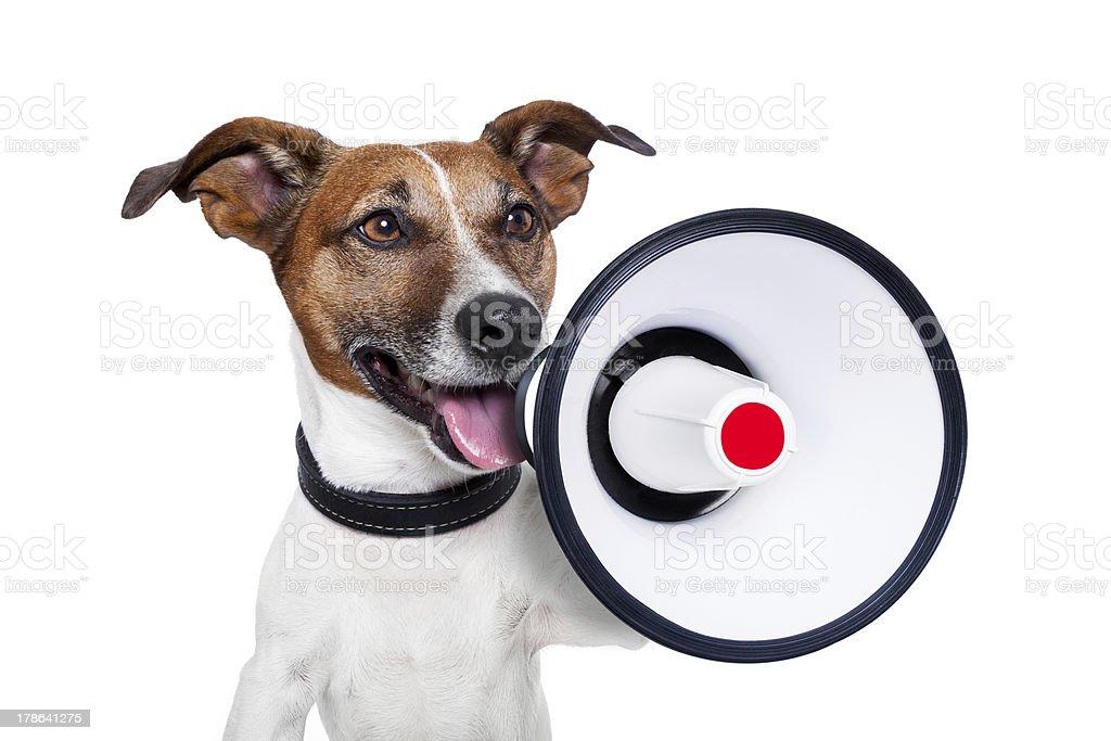 dog megaphone stock photo